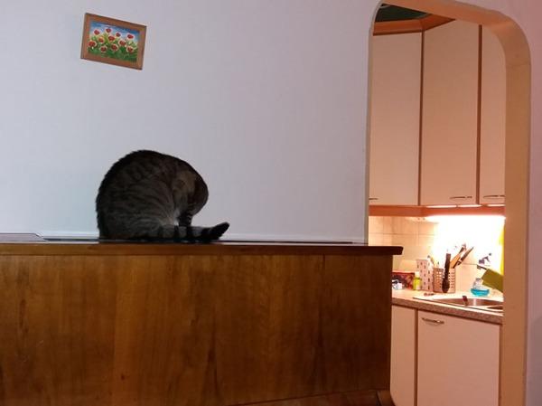 trad kissa pää taittuneena näkymättömiin kamerasta katottuna