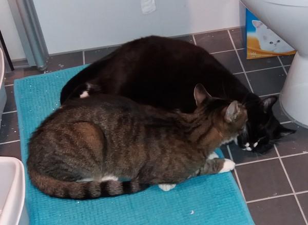 turkoosin maton päällä lämpimällä vessan lattialla Zet ja Ilona vierekkäin ja Zet pussaa Ilonaa