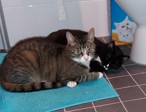 Vessan lattialla möllit vierekkäin, ilona silmät kii ja Zet katsoo suoraan kameraan. takaa näkyy kissanhiekkapaketti jossa kaksi valkoista kissaa.