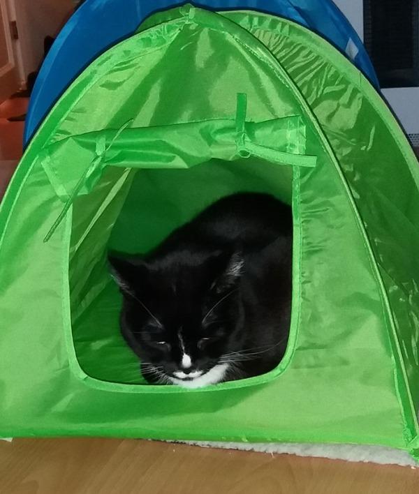 vihreä teltta, vähän pienempi kuin edellinen ja eri mallinen. Mutta jo Ilona ehti sisälle!