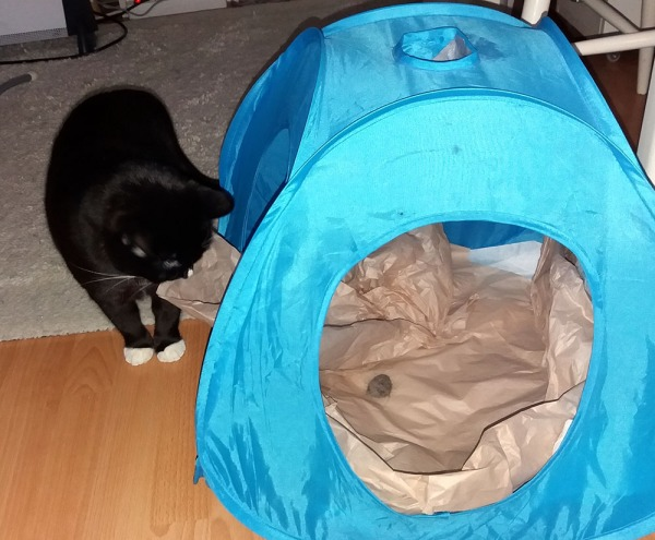 ilona tuijottaa palloa teltan ulkopuolelta