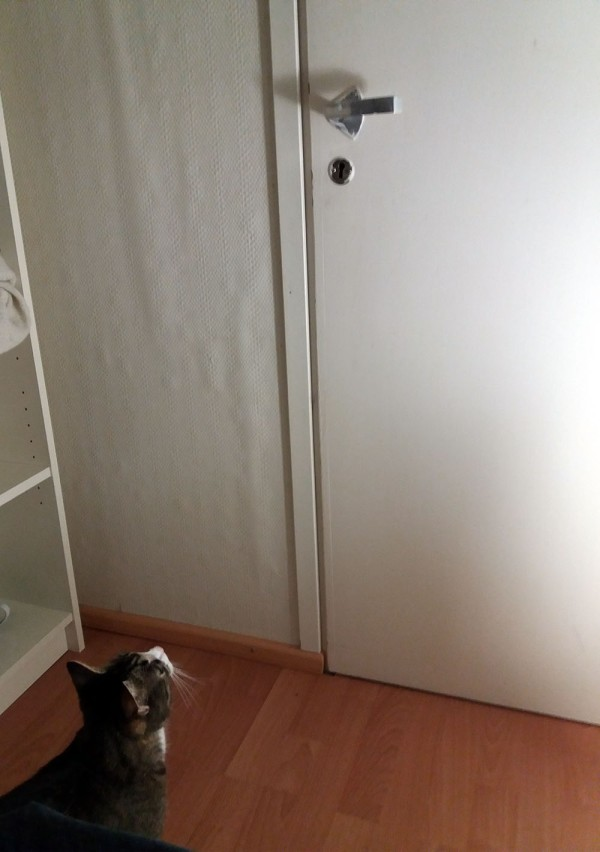 zetor tuijottaa tiiviisti vaatehuoneen oven kahvaa