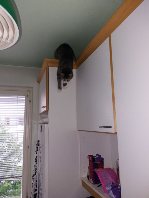 nyt se tulee alas kaapin päältä, ottaa tassuilla tukea ensin seinästä ja sitten hop