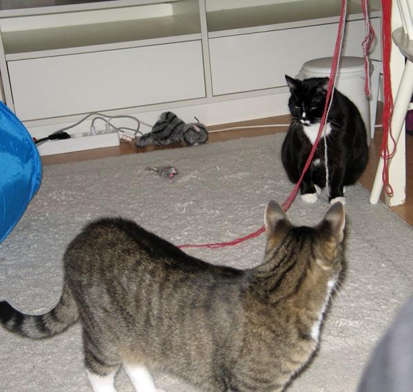 langat roikkuu tuolinkarmilta ja kissat tuijottaa niitä passiivisina