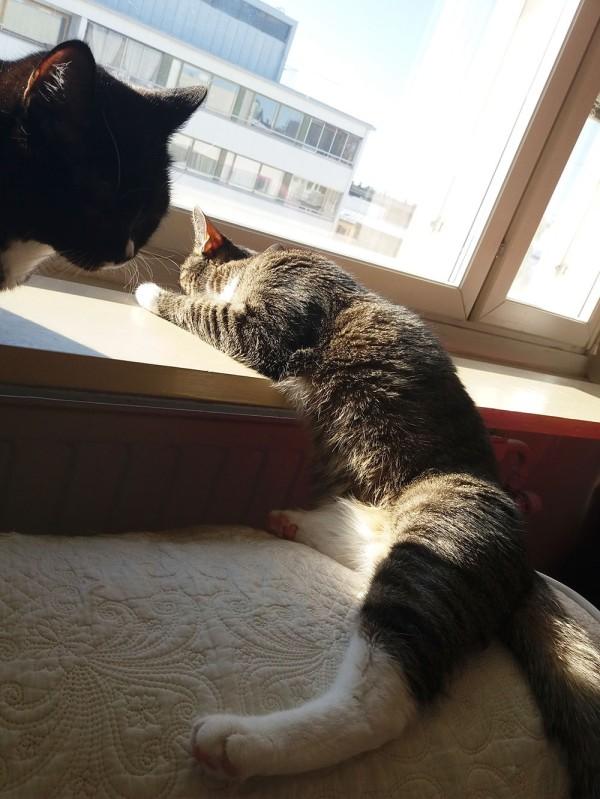 kissat vuokrakodin ikkunalla, zet on muuttunut nesteeksi joka valuu ikkunalaudalta sohvalle ja ilonasta näkyy vain naama