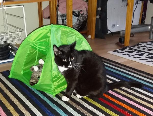 Täs tulee seittemän kuvaa, joissa Zetor makaa selällään puoliksi teltassa ja Ilona istuskelee ja lojuskelee siinä vieressä matolla. Zetor ottaa kontaktia, ilona enemmän asenteella antaas nyt olla