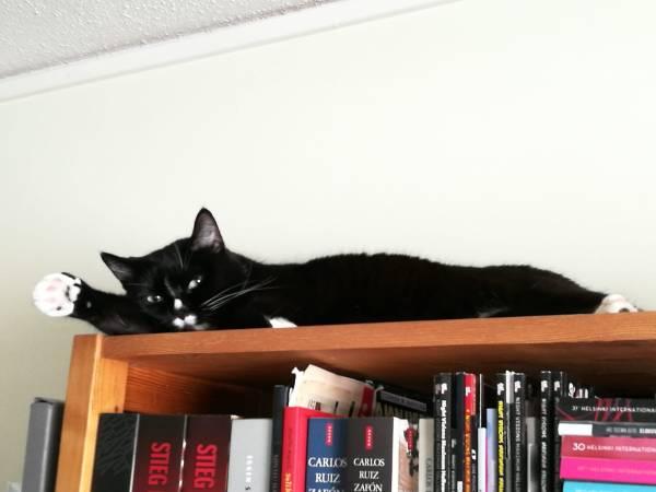 Ilona oikea tassu suorana nukkuu kirjahyllyn päällä, sieg heil