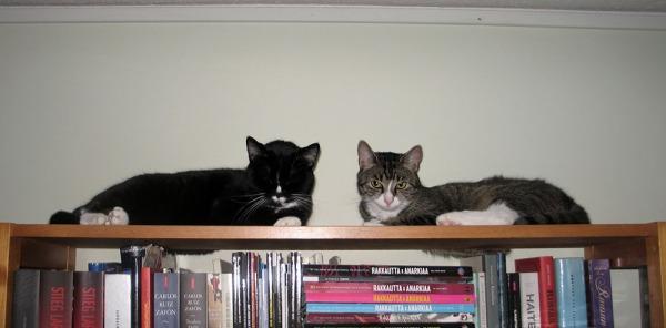 Kaverit naamakkain lojuvat kirjahyllyn päällä, Zet katsoo kameraan mutta Ilona tietty sulkenut silmät