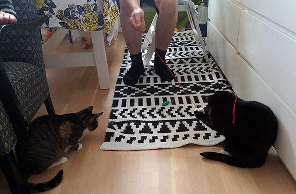 Karrin jalat näkyy, leikittää punaiella langalla kahta kissaa