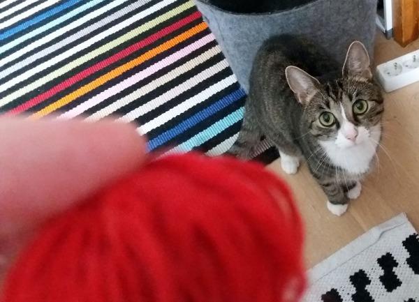 etualalla punainen möykky eli lankakerä, taempana Zet kiinnostus isona silmissä