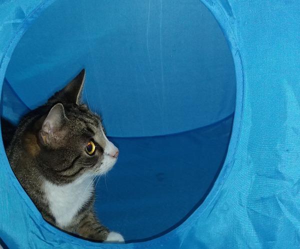 zetor lököttelee vanhassa sinisessä teltassa