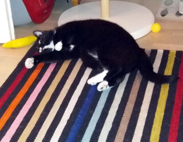 ilona lojuu lattialla, kissanminttubanaani on jo heitetty niskan taakse ja mielenkiinto loppui