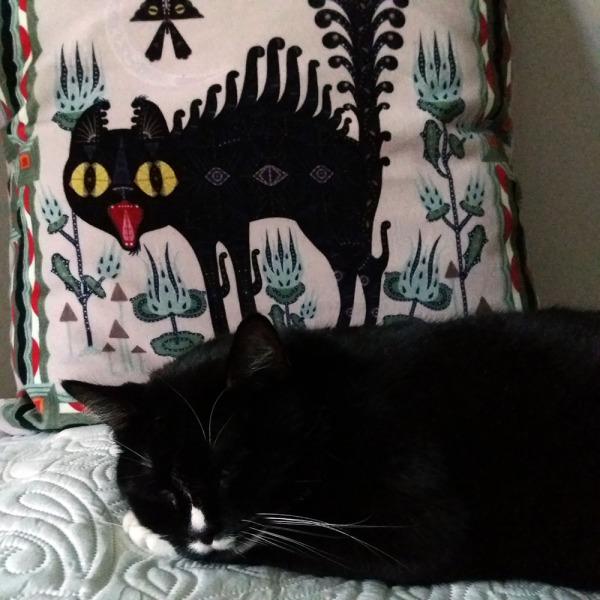 ... ja käy nukkumaan tyynyn viereen.