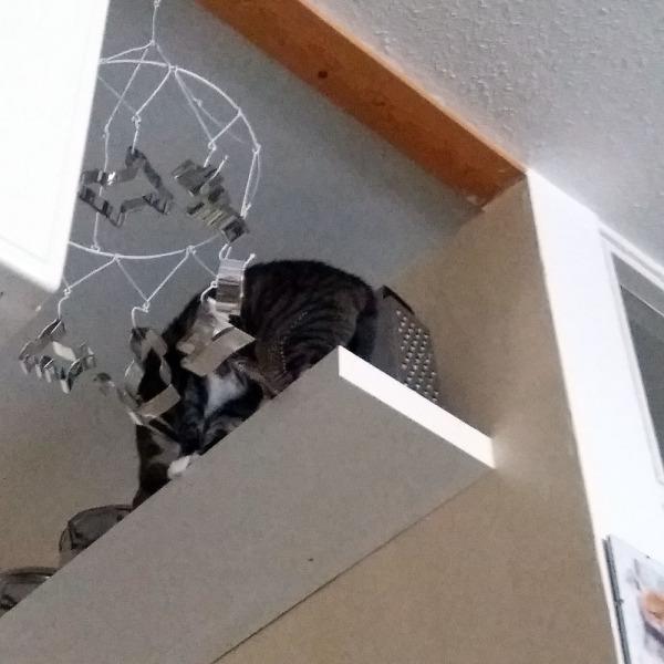 zetor hitsi vieköön mennyt jääkaapin päältä astiakaapin päälle ja sieltä retkeillyt kattilahyllylle sukkakeppia rassaamaan
