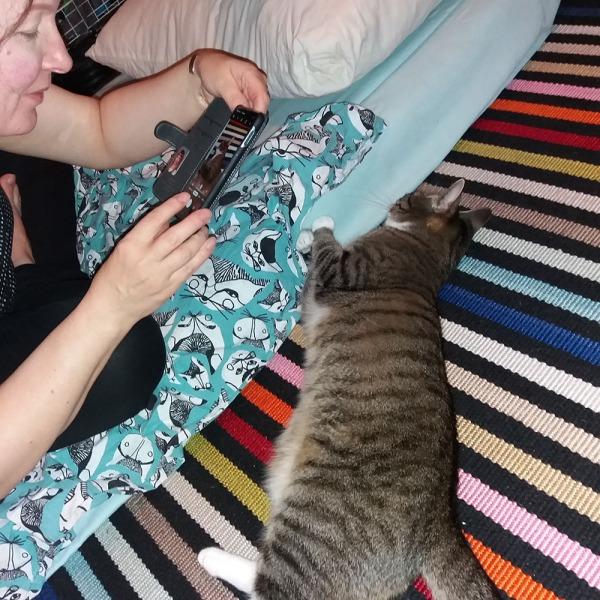 hylättyä kissaparkaa z rapsutellaan ja kuvataan lattialla