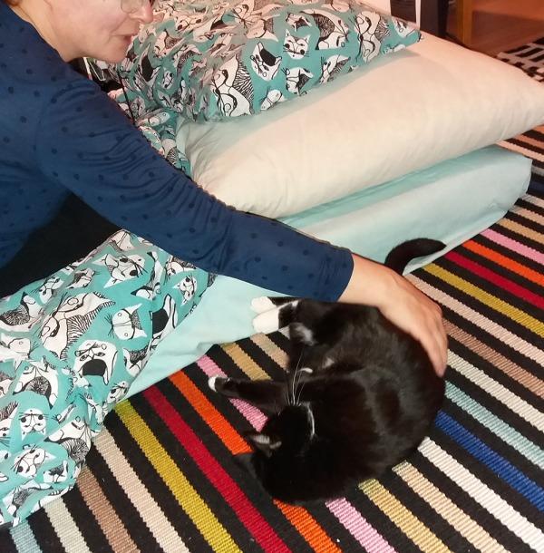 toista hylättyä kissaparkaa myös rapsutetaan lattialla